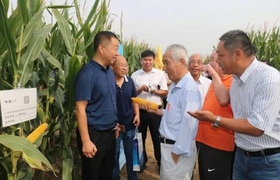 第四届黄淮海玉米新品种地展博览会在郑州举行