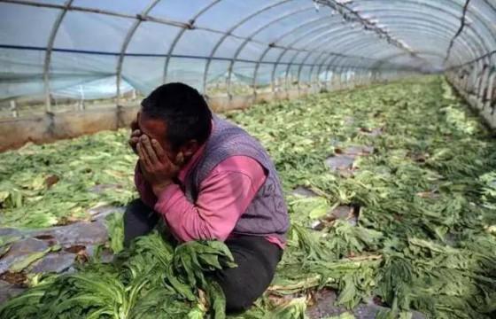 警惕,已有人受骗!这种新型农业骗局专挑种植户,防不胜防!