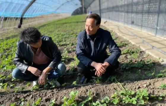 蔬菜没有蔬菜味儿,和种子啥关系?这位农业专家道出了原因