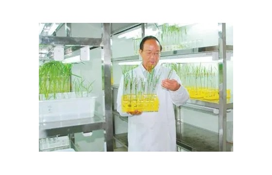从事杂交水稻育种近50年——谢华安院士:毕生目标是让大家吃得好